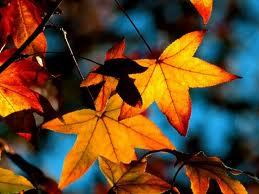 pretty autumn leaves against blue sky